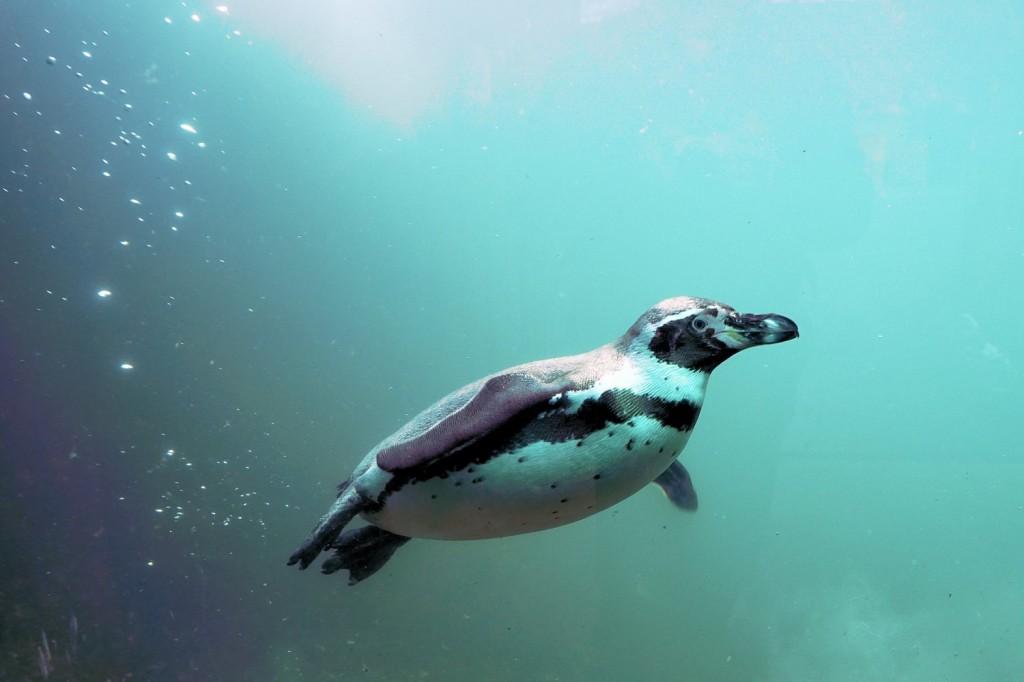 Douglas swimming